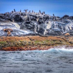 Montague Island Seals and Birds