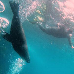 Montague Island Snorkel with Seals 02 sq