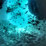 South West Rocks - Fish Rock Cave Dive - Entry