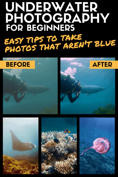 UNDERWATER PHOTOGRAPHY FOR BEGINNERS - diving snorkelling