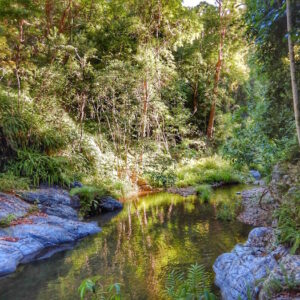 northbrook gorges - d aguilar national park - brisbane 06 sq