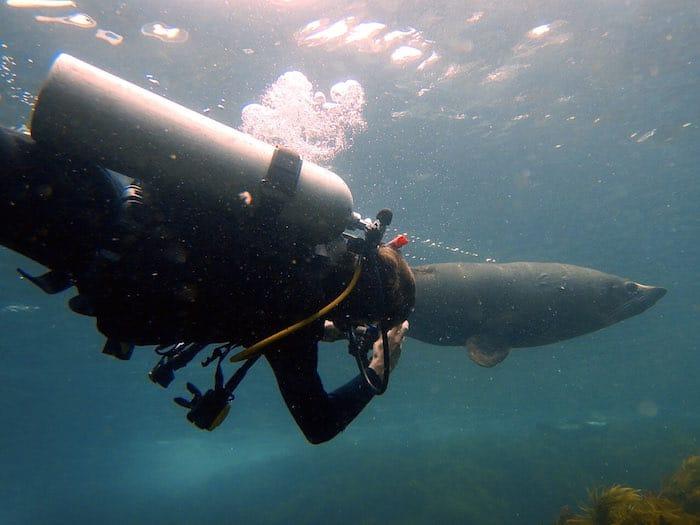 Dive Seals Montague Island - Edit Underwater Photo