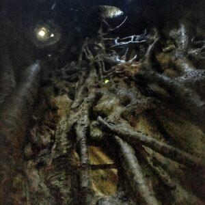 Lamington National Park Booyong Walk - Inside a fig tree