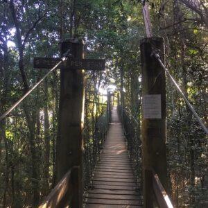 Lamington National Park Tree Top Walk Bridge