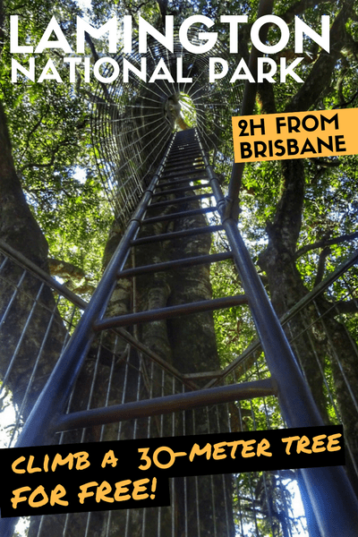 Have you ever climbed to the top of a 30-meter tree? You can do that for free at the Lamington National Park Tree Top Walk! #Australia #Queensland #Brisbane #NationalPark #TreeLovers #RainForest