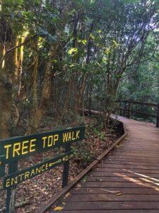 Lamington National Park Tree Top Walk Entrance