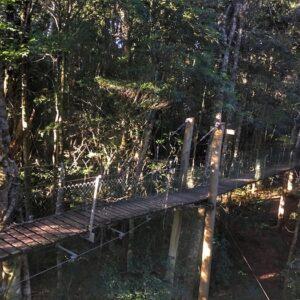 Lamington National Park Tree Top Walk First Suspension Bridge