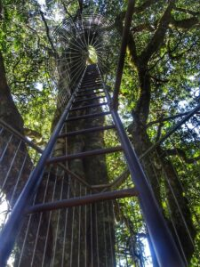 Lamington National Park Tree Top Walk Ladder