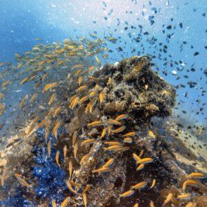 SS Yongala dive - Wreck