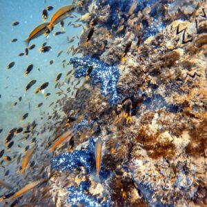 SS Yongala dive - Wreck + fish + coral