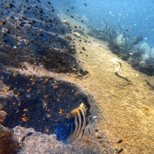 SS Yongala Dive Guide: Crucial Tips To Plan Your Trip To The SS Yongala Wreck