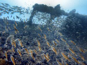 SS Yongala wreck - Scuba Diving