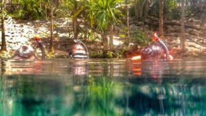 Snorkelling-in-Tulum-Mexico-Garden-of-Eden
