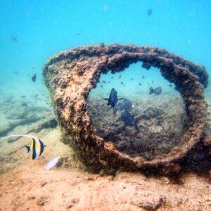 Moreton Island Scuba Diving Tangalooma Wrecks 16