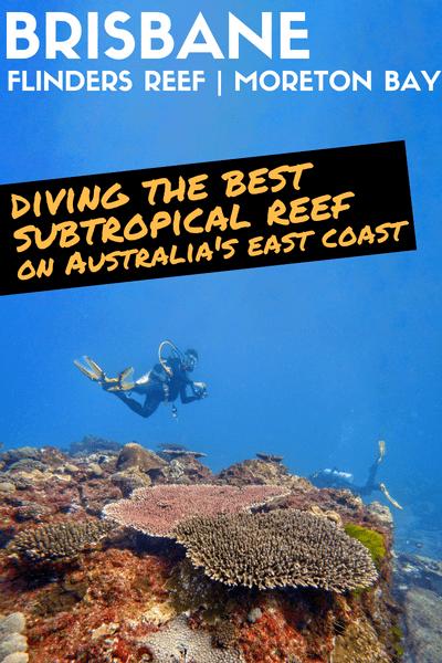 Diving Flinders Reef Brisbane Moreton Bay