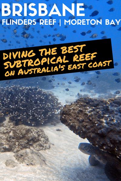 Diving Flinders Reef Brisbane Turtle