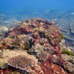 Diving Flinders Reef - Brisbane scuba diving