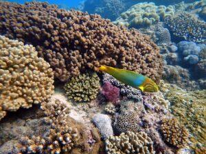 Diving Flinders Reef Colourful Fish