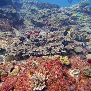 Diving Flinders Reef Coral and fish