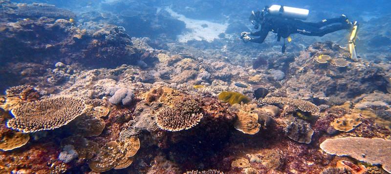 Diving Flinders Reef