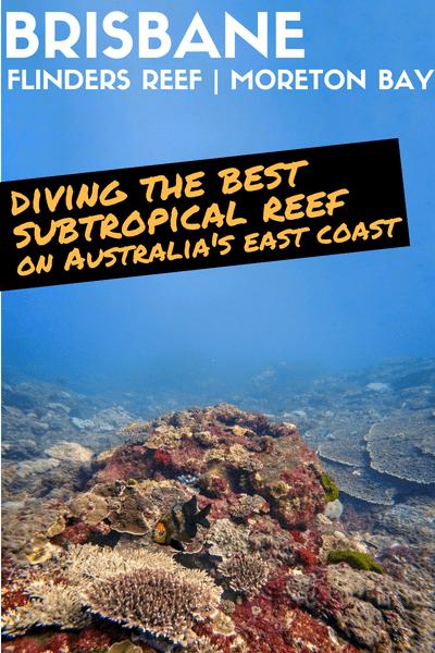 Flinders Reef Diving Brisbane Moreton Bay