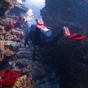 Flinders Reef Diving Canyon