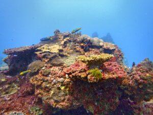 Flinders Reef Scuba DIving Moreton Bay