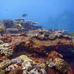 Flinders Reef Scuba Diving