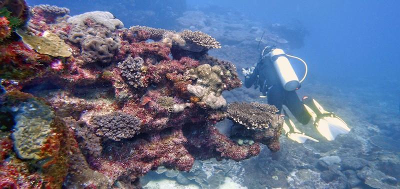 Scuba Diving Flinders Reef Coral formations