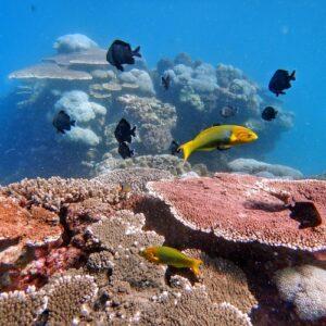 Scuba Diving Flinders Reef Moreton Bay Brisbane Coral Reef