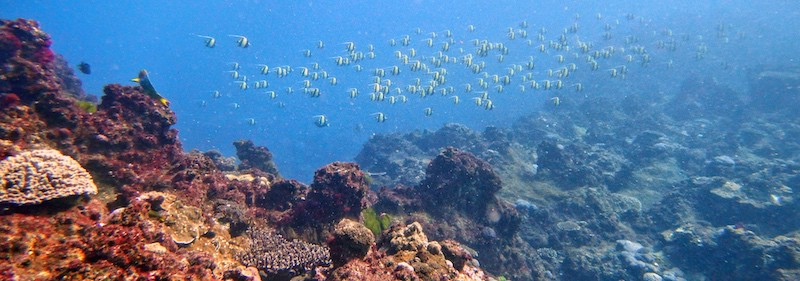 Scuba Diving Flinders Reef