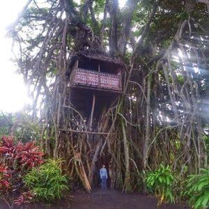 Tanna Volcano Accommodation Island of Fire Tree House