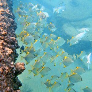 Gold Coast Seaway diving
