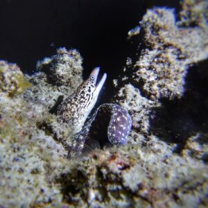 Gold Coast Seaway night dive eel