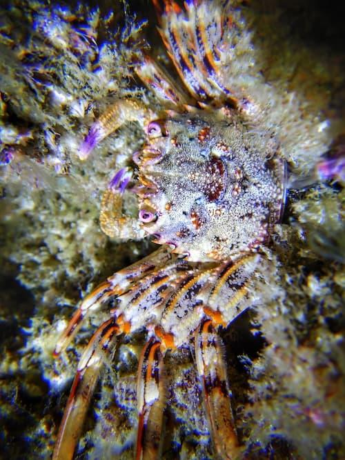 Gold coast seaway night dive crab
