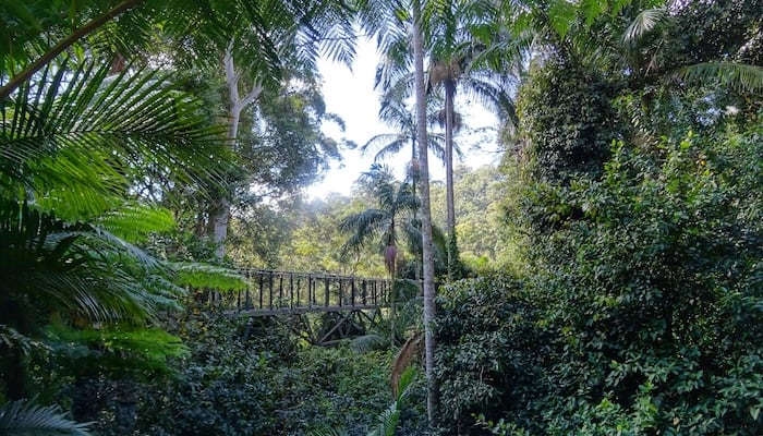 Mount Tamborine Skywalk Cost Is It Worth