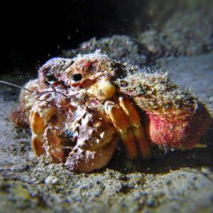 Night dive gold coast seaway - shell