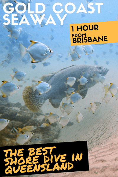 The best shore dive in Queensland: scuba diving the Gold Coast Seaway