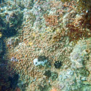 Snorkelling Kirra Reef