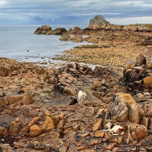 Best of Brittany - Batz Island