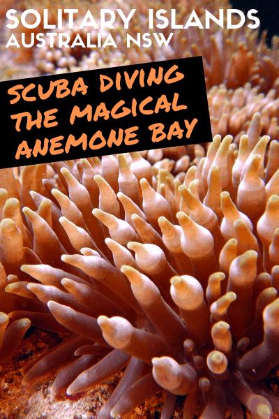 Anemone Bay NSW Scuba Diving Australia