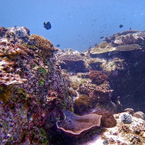 Corals North Solitary Island Scuba Diving