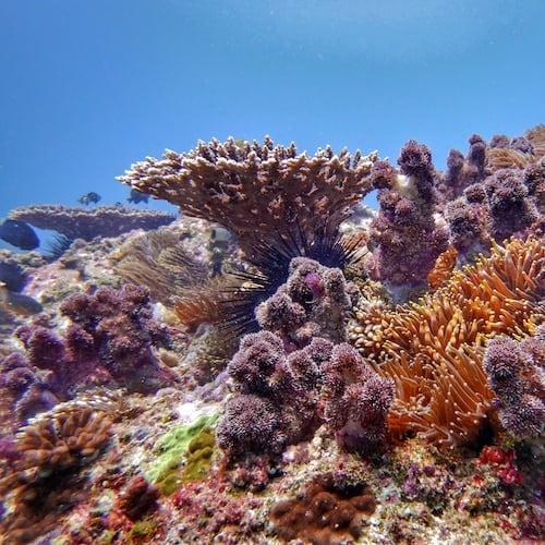 North Solitary Island Scuba Diving Wooli