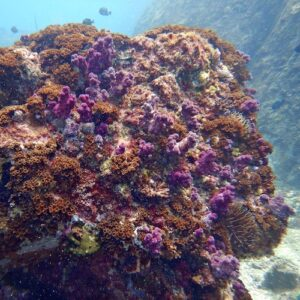 North Solitary Island Scuba Diving from Wooli