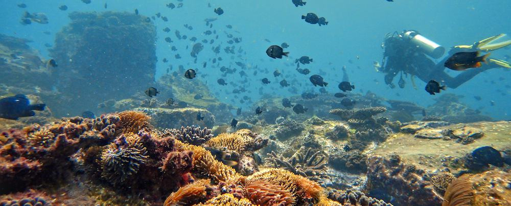 North Solitary Island - Wooli Scuba Diving