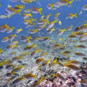 North Solitary Island scuba diving