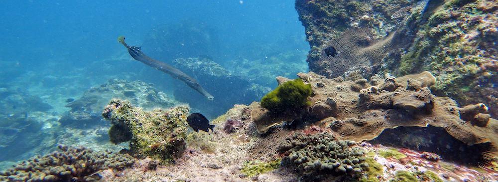 Scuba Diving Solitary Islands NSW Wooli