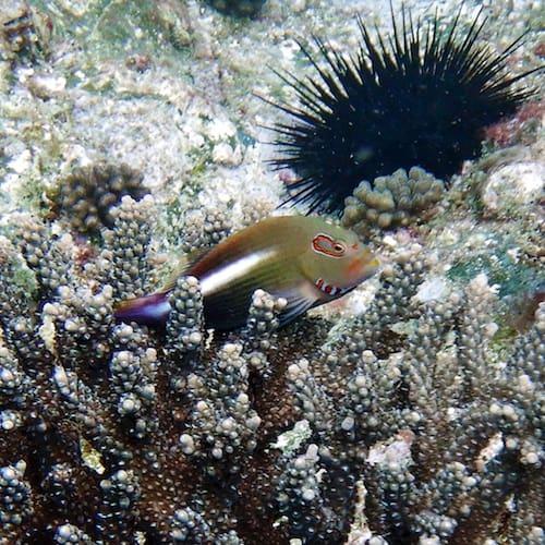 Scuba Diving Wooli North Solitary Island Fish close up