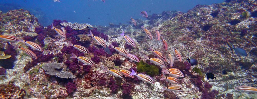 Scuba Diving Wooli North Solitary Island
