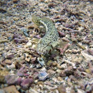 Solitary Islands Scuba Diving